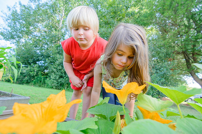Children observing garden